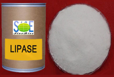 Animal Nutritional Feed Additives White Lipase Enzyme Production Szym-LIP30FE